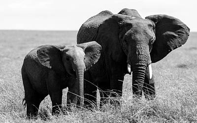 Photograph - African Elephants by Aidan Moran