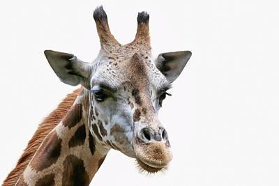 Photograph - African Giraffe by Athena Mckinzie
