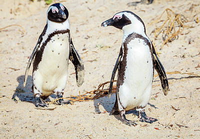 Photograph - African Penguins by Alexey Stiop