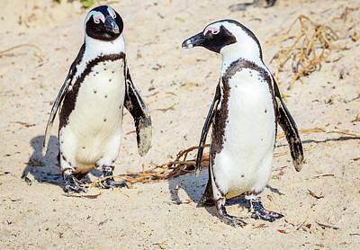 African Penguins Art Print