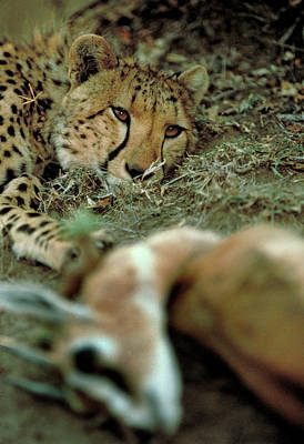 Photograph - After The Kill by Carl Purcell