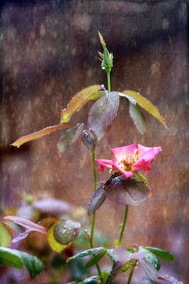 Photograph - After The Rain by Joan Bertucci