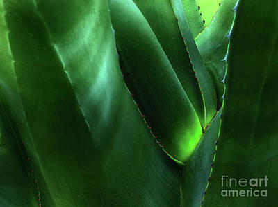 Halloween Movies - Agave by Mike Nellums