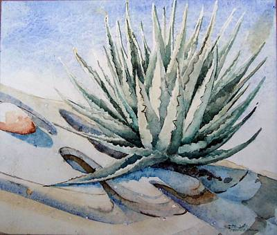 Agave Art Print by Steven Holder