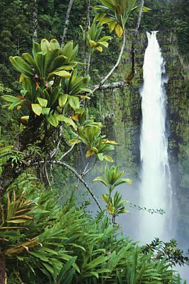 Photograph - Akaka Falls by Ron Dahlquist - Printscapes