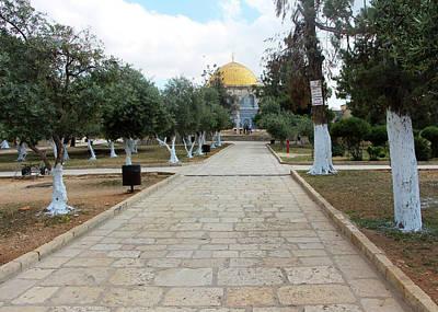 Photograph - Al Aqsa Trees by Munir Alawi
