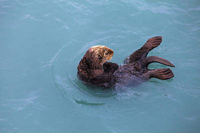 Alaska Photograph - Alaska Sea Otter by Scott Slone