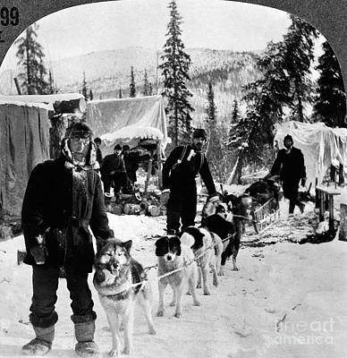 Photograph - Alaskan Dog Sled, C1900 by Granger