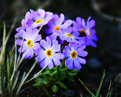 Photograph - Alaskan Wild Flowers by Anthony Jones