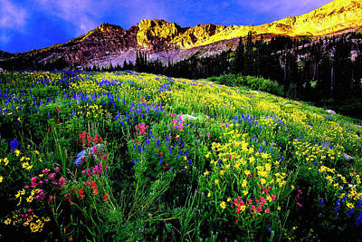 Photograph - Albion Basin by Norman Hall