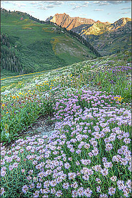 Photograph - Albion Basin by Utah Images