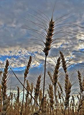 Photograph - All About Wheat by Sara Raber