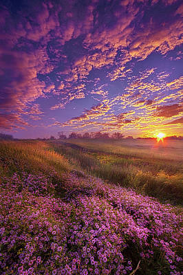 Photograph - All Joined As One by Phil Koch