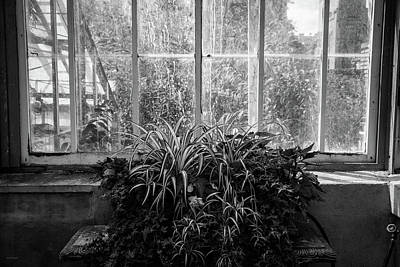 Photograph - Allan Gardens by Ross Henton