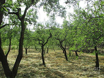 Photograph - Almond Trees In Lanjaron by Chani Demuijlder