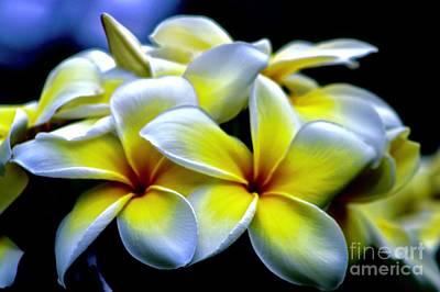 Photograph - Aloha by Craig Wood