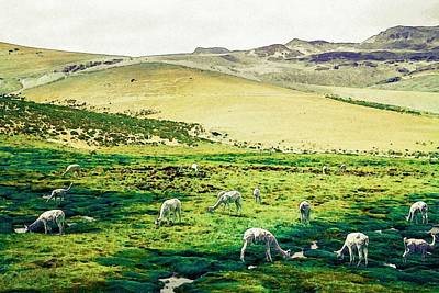 Painting - Alpacas by Celestial Images
