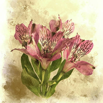 Lily Of The Incas Photograph - Alstroemeria by Robert Murray