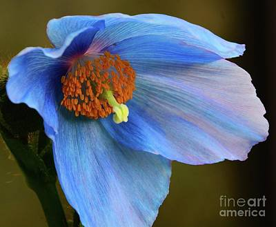 Photograph - Am I Blue by Cindy Manero