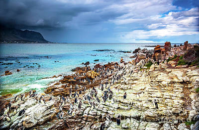 Photograph - Amazing Landscape Of Betty's Bay by Anna Om