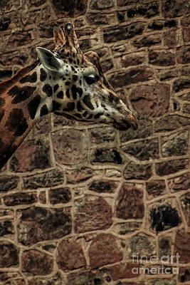 Mixed Media - Amazing Optical Illusion Of A Giraffe by Doc Braham