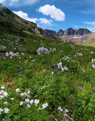 Photograph - American Basin Wildflowers by Steve Stuller