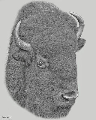 Bison Digital Art - American Bison by Larry Linton