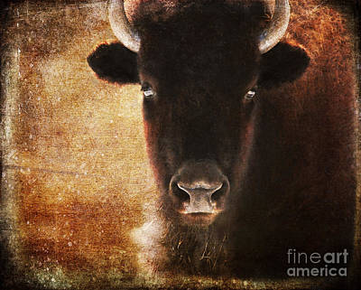 Photograph - American Bison by Olivia Hardwicke