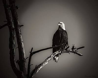 Negative Space - American Eagle by Gary Bengsch