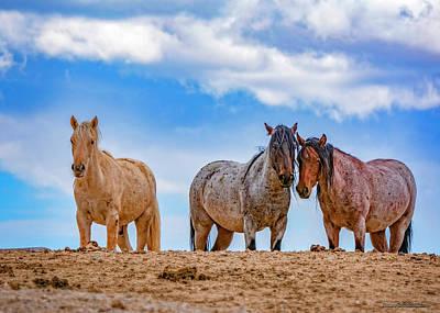 Photograph - American Wild Horses by LeeAnn McLaneGoetz McLaneGoetzStudioLLCcom