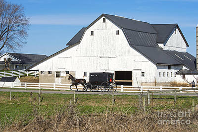 Photograph - Amish Buggy And White Barn by David Arment