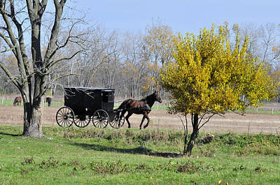 Amish Photograph - Amish Buggy Late Fall by David Arment