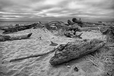 Photograph - Among The Driftwood by Steven Clark