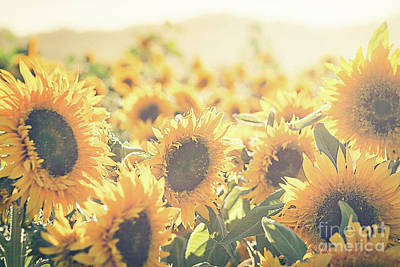 Fields Of Flowers Photograph - Among The Sunflowers by Ana V Ramirez