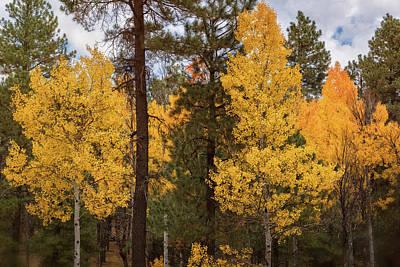 Photograph - An Arizona Autumn  by Saija Lehtonen