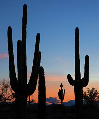 Photograph - An Arizona Sunrise by Sue Cullumber