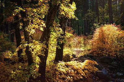 Photograph - An Autumn Morning In The Woods  by Saija Lehtonen
