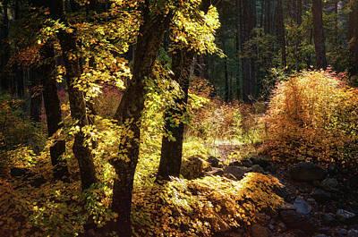 Photograph - An Autumn Morning In The Woods  by Saija Lehtonen