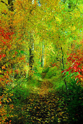 Fallen Leaf Photograph - An Autumn Path by Jeff Swan