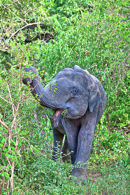 Photograph - an Indian Elephant is walking through the jungle by Regina Koch