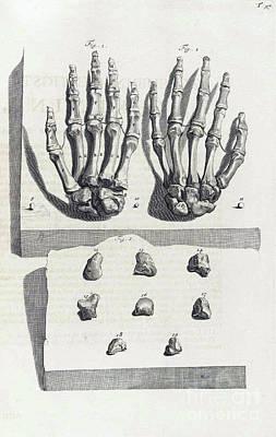 1690 Photograph - Anatomia Humani Corporis, Table 97, 1690 by Science Source