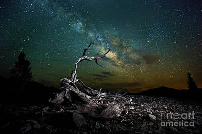 Photograph - Ancient Bristlecone Pine Tree by Jerome Obille