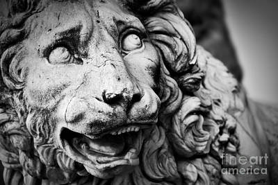 Photograph - Ancient Sculpture Of The Medici Lion. Florence, Italy by Michal Bednarek