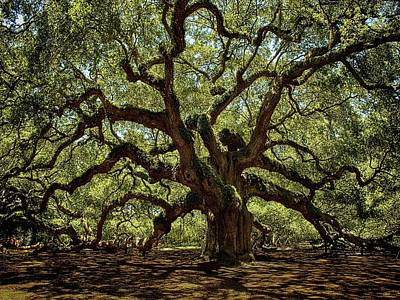 Photograph - Angel Oak by Kevin Senter