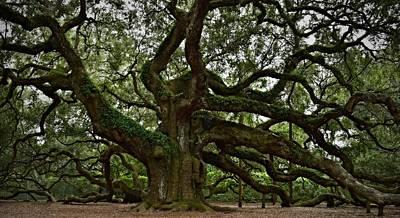 Photograph - Angel Oak by Steven Liveoak