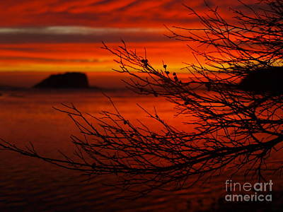 Photograph - Angry Sky by Trena Mara