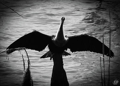 Photograph - Anhinga, No. 17 by Elie Wolf