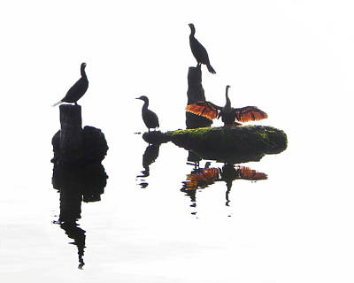 Digital Art - Anhingas Sunning by Francesa Miller