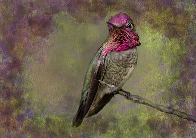Photograph - Anna's Hummingbird by Barbara Manis