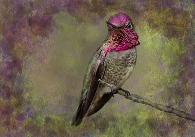 Photograph - Anna's Hummingbird by Barbara Manis